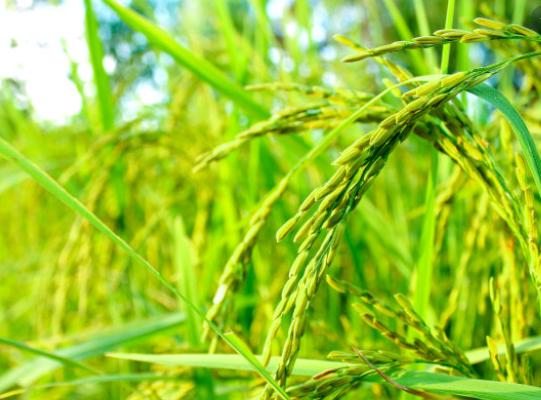 Melirik Pertanian Di Desa yang Terdampak